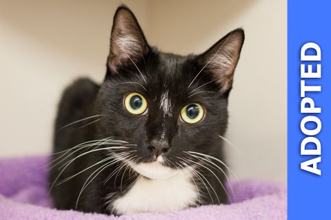 Paxton was adopted!