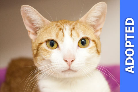 Pippi was adopted!