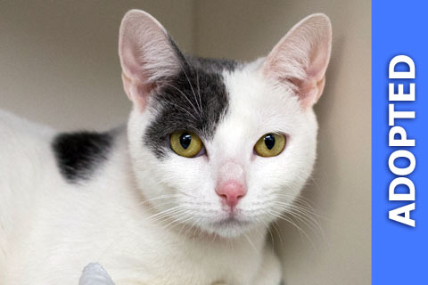 Portia was adopted!