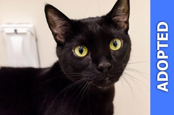 Salem was adopted!