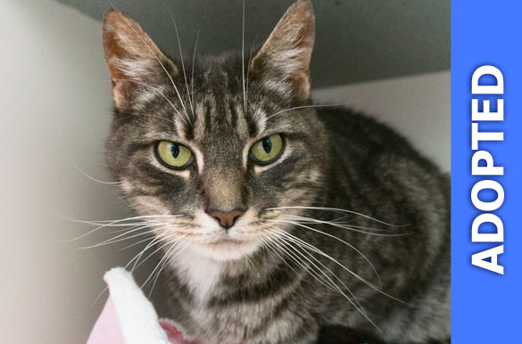 Seigel was adopted!