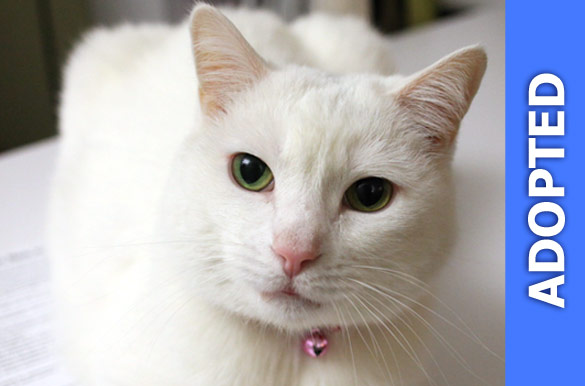 Snowy was adopted!
