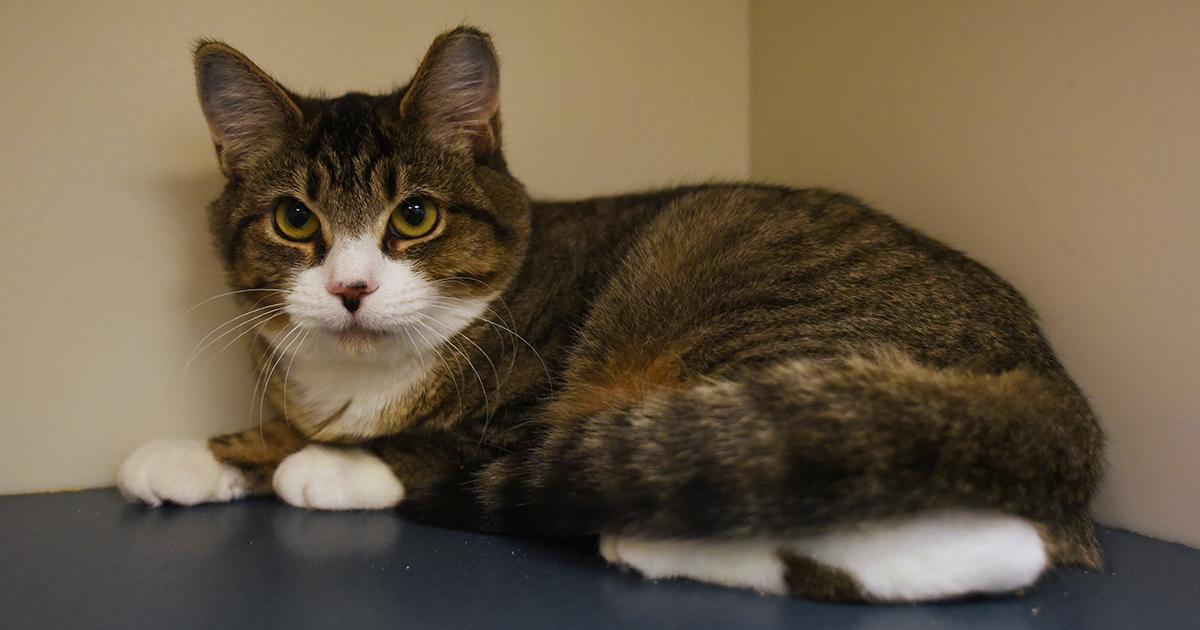 Aspca Nyc Adoption Cats
