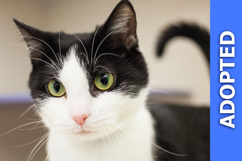 Tori was adopted!