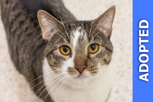Trent was adopted!