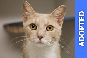 Victor was adopted!