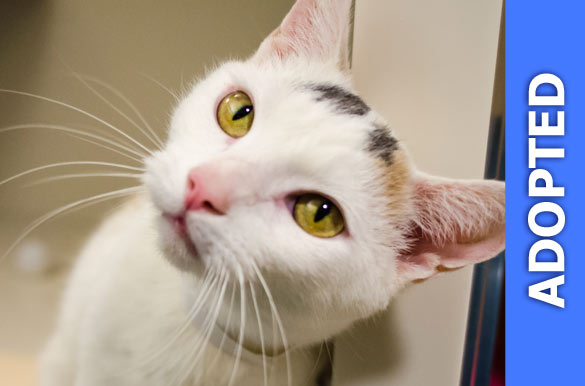 Wiggles was adopted!