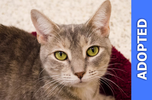 Willow was adopted!