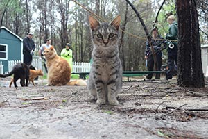 multiple cats standing and walking outside