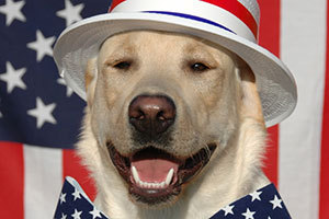 Dog wearing star-spangled outfit in front of flag