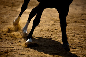 A horse's legs, shown in motion over dirt