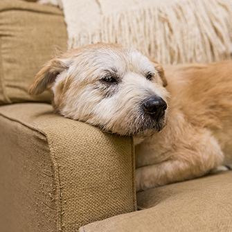 Behavior Problems in Older Dogs | ASPCA