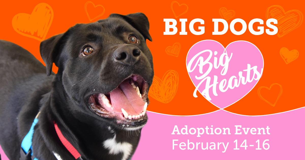 Big Dogs Big Love promo