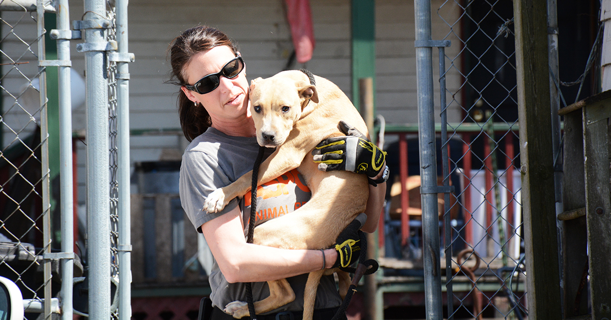 Quad Cities Dog Rescue