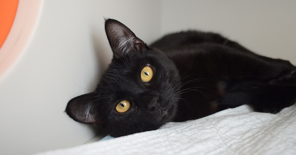 black cat appreciation day is this friday aspca