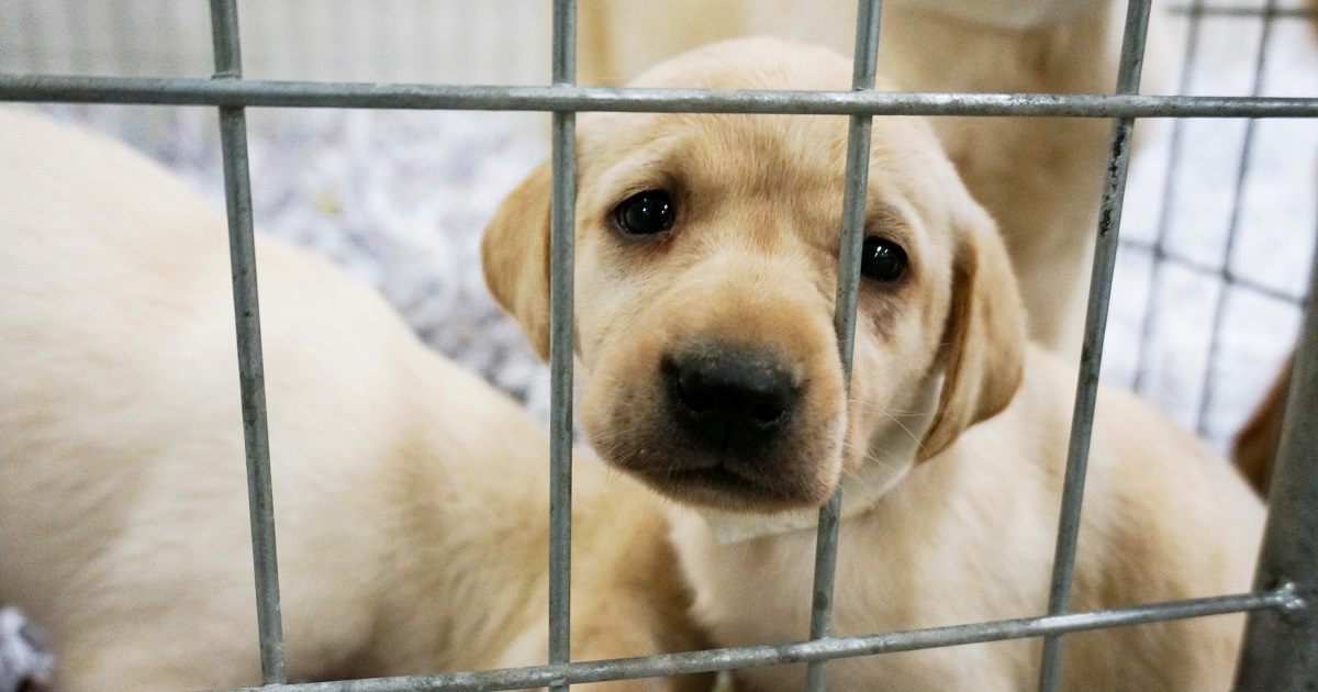 Canton Georgia Unanimously Rejects Puppy Mills Aspca