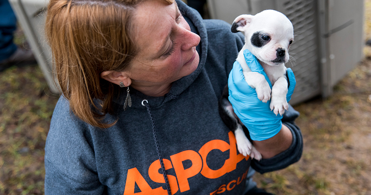 Dogs Rescued from MI Puppy Mill Are Ready for Loving Homes after