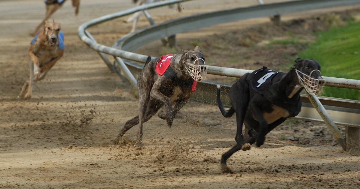 greyhound racing should be discontinued in the country