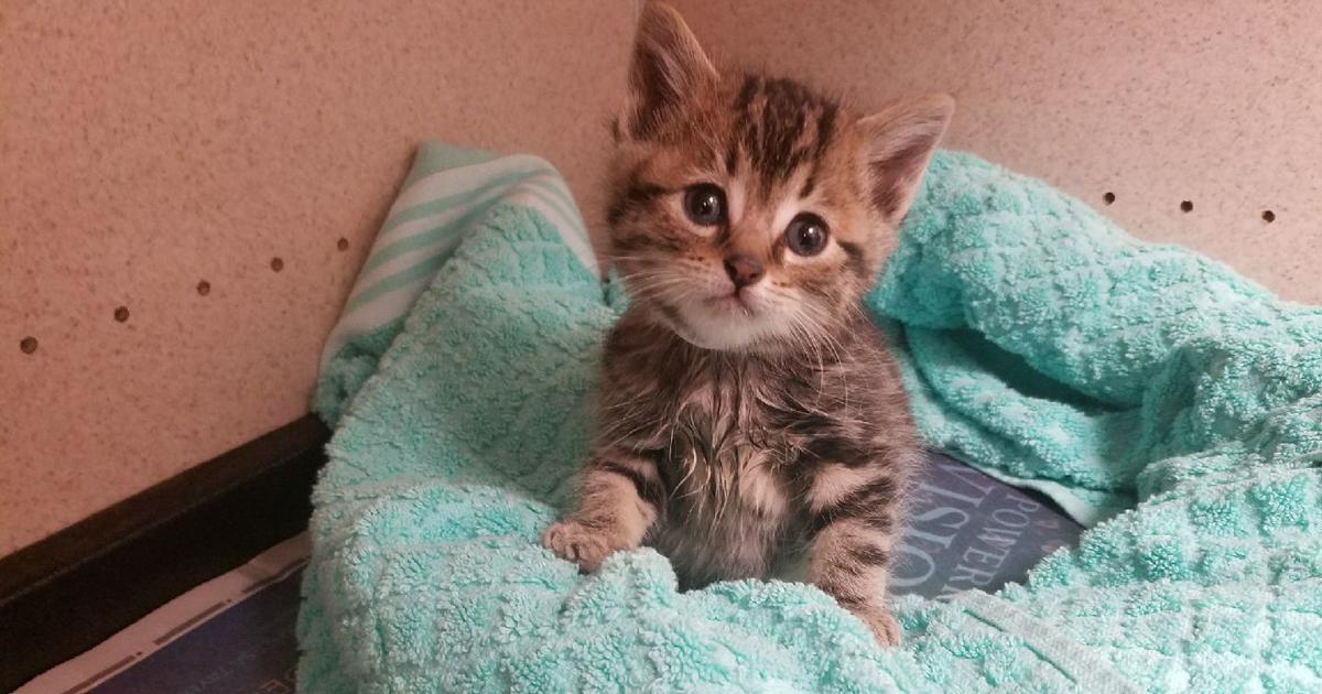 Caramel kitten webcam teen webcam
