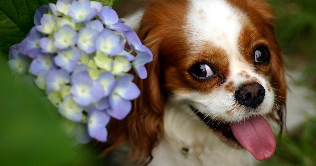 It's Officially Spring! Make Sure Your Garden is Pet-Friendly