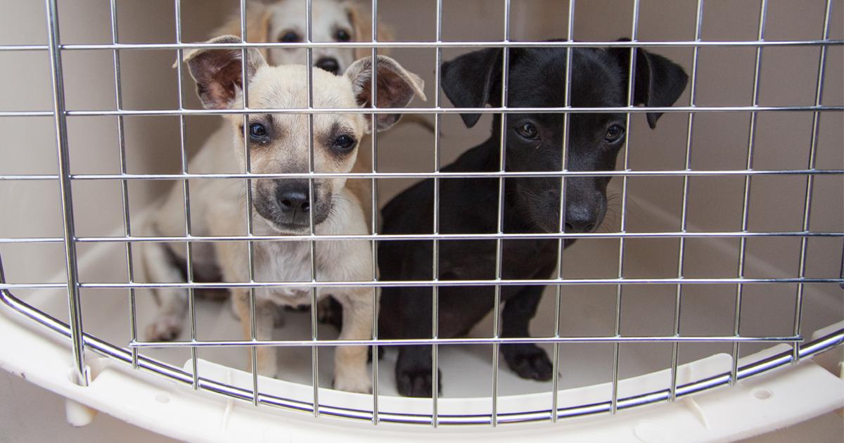 Beware of Swap Meet Puppies This Summer | ASPCA