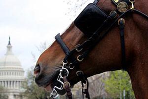 horse in D.C.