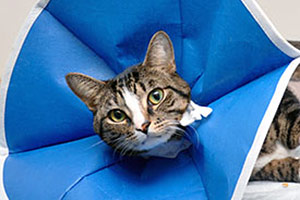 cat with fabric cone