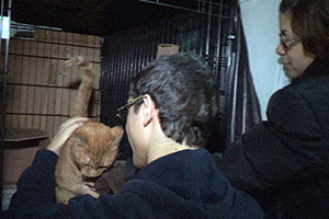 Sandy pets reunited with families