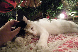 Valentina under christmas tree