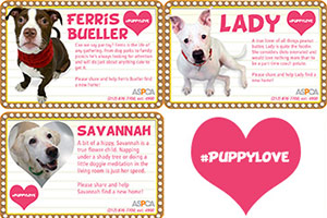 Valentines Day cards featuring ASPCA adoptable dogs