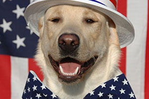 dog wearing stripe hat and large star bow tie with a flag in the background