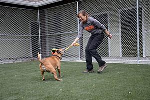 Behavioral Rehab Center St. Hubert's  Animal Welfare Center