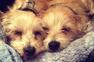 Zooey Deschanel's rescue dogs