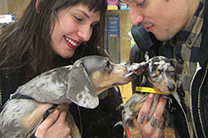 Fresh Starts for Doxies Born into Hoarding Situation