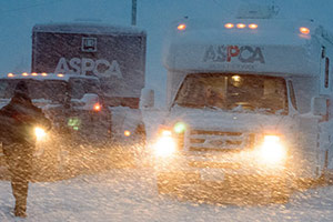 ASPCA Battles Blizzard to Care for 100 Rescued Dogs