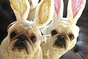 Four Tips For A Pet-Safe Easter