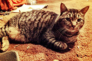 striped cat laying on carpet