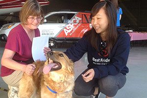 Critical Transport: California Dogs Fly to Washington for Adoption