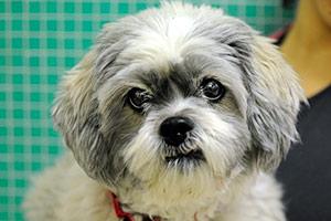 ASPCA Happy Tail: Meet Jane, City Pup