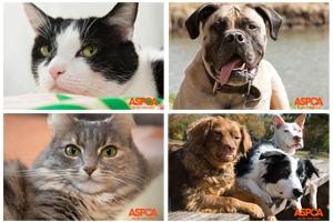 Help Us Choose the 2015 Calendar Cover Pet!