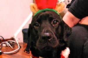 Black dog in festive holiday wear