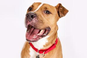 Adoptable dog Romeo