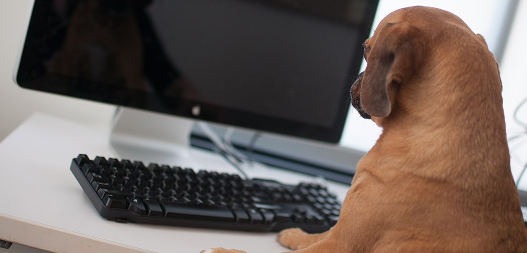 Take Your Dog to Work Day: Dog sitting at computer