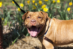 ASPCA Adoptable Dog: As Good As Gold