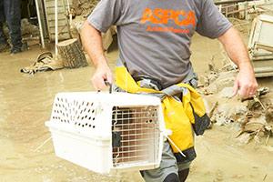 ASPCA Responder carries crate