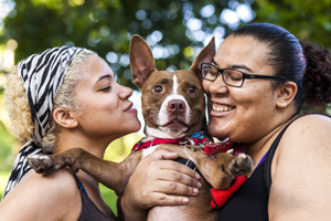 Two women holding young red and white pit bull
