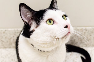 ASPCA Happy Tails: A Home for Hal