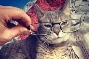 Small grey cat wearing glasses