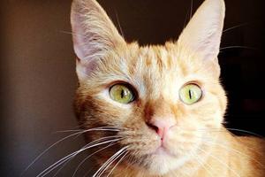 Close up of orange kitten