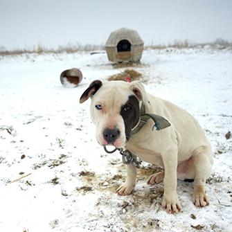 ASPCA Happy Tails: Blue's Story